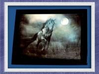 FULL-MOON HORSE
